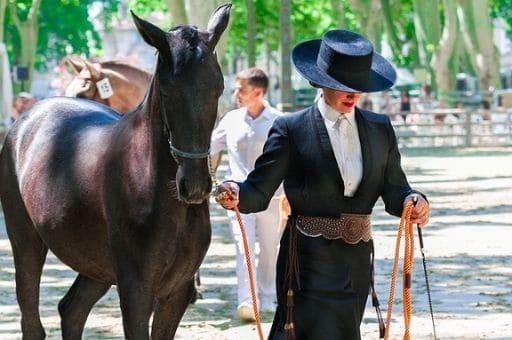 Lou Broustaricq : Sorties Sanguinet Spectacle Equestre